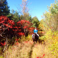 More than just horseback riding lessons and trail rides - GTA