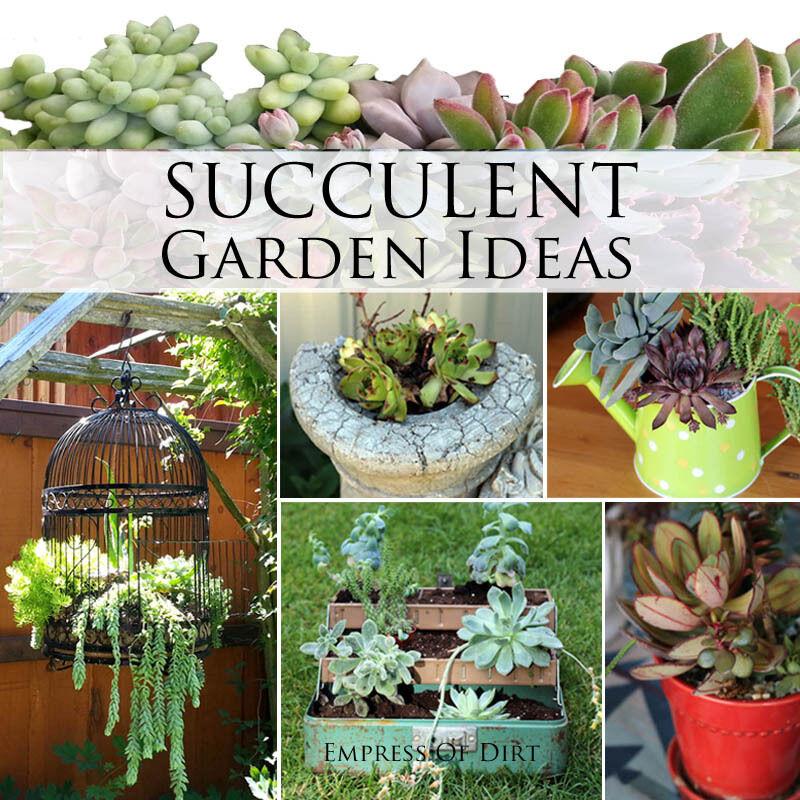 Succulent Garden Ideas | EBay