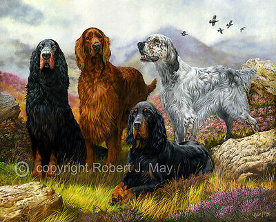 Limited Edition Setter Print by Robert J. May
