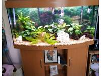 4FT JUWEL TANK AND CABINET