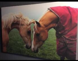Extra large horse canvas