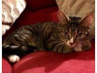 Kitten for rehoming.
