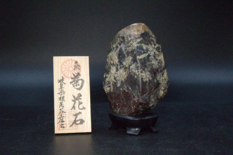 Japanese kikkaseki chrysanthemum stone Gifu Neodani  Suiseki SS140