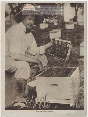 Honey Beekeeper With A Frame From A Hive Original 1919 Photogravure Print