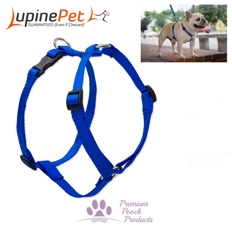 Lupine Pet Harnesses For Dogs Cats In Australia