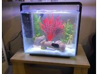 45 litre tropical fish tank with pump, lights, heater, ornaments and fish
