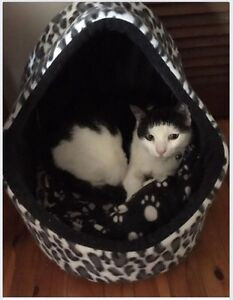 Abandoned cat needs new home Morningside Brisbane South East Preview