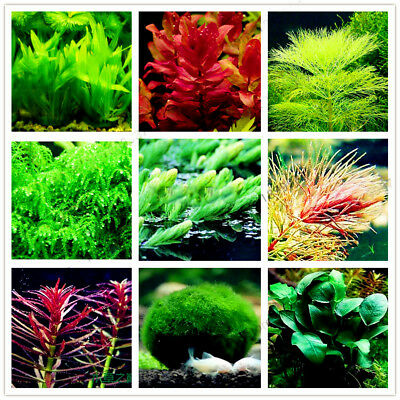 Aquarium Plant Mix Seeds Water Grasses Random Aquatic Plant Grass Indoor (Best Indoor Plant Seeds)