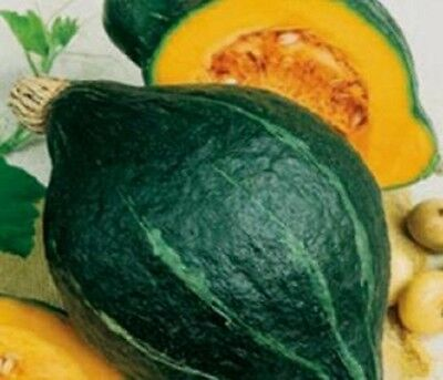 Heirloom GREEN HUBBARD Winter Squash Warted 25 SEEDS Non GMO **COMBINE SHIPPING*