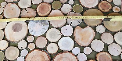 100 Astscheiben, Holzscheiben, Baumscheiben, Floristik, Bastel, Dekomaterial