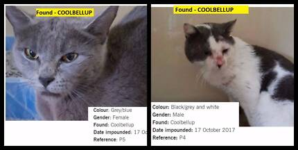 Wanted: FOUND Pets - COCKBURN shire & surrounding areas