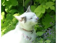 Lost white cat in North Ferriby, East Yorkshire