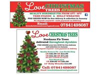 Real Christmas Trees from £30.00 including delivery throughout Ayrshire 10% off all pre orders