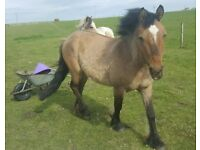 Mare 3 years ago