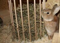 Heu und Stroh für Meerschweinchen und Kaninchen Nordrhein-Westfalen - Vlotho Vorschau