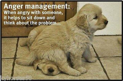 Funny Dog Humor Anger Management Refrigerator Magnet