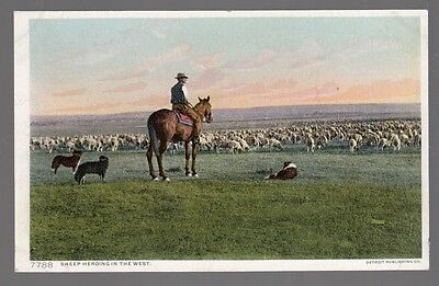 [52104] OLD POSTCARD COWBOY HERDING SHEEP IN THE WEST