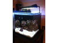 Aqua one nano 55