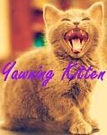 A Yawning Kitten