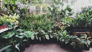 Huge Indoor Plant Sale - Collingwood Collingwood Yarra Area Preview