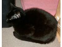 Female kitten/cat