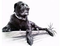 Professional Ballpoint/Biro Portrait Artist, People and Pet Portraits, Commission Artist Bournemouth