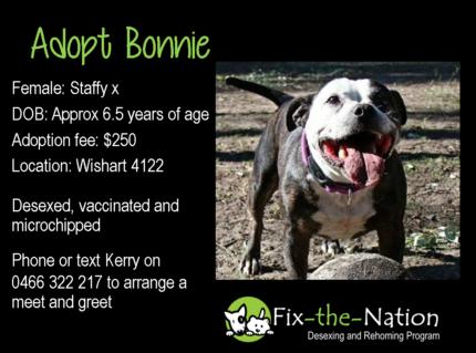 Adopt Bonnie - Staffy x