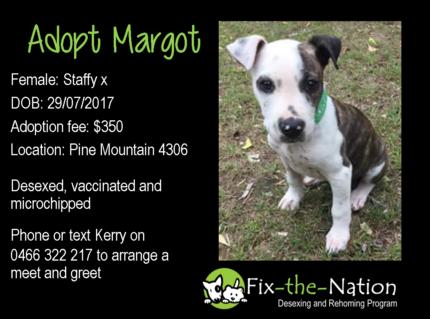 Adopt Margot - Staffy x