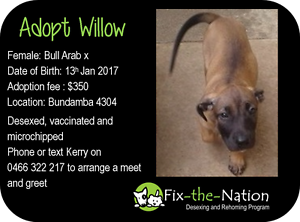 Adopt Willow - Bull Arab x Ipswich Ipswich City Preview