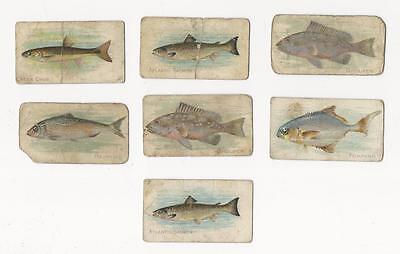 LOT OF 7 1910 T 58 SWEET CAPORAL CIGARETTE CARDS-FISH