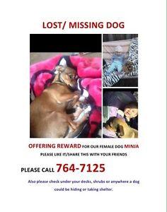REWARD OFFERED FOR LOST DOG