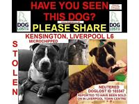 STOLEN&SOLD DOG PLEASE HELP!