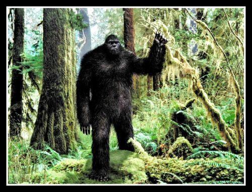 "4.5"" RARE! Pacific Northwest Bigfoot vinyl sticker. Quality Sasquatch decal."