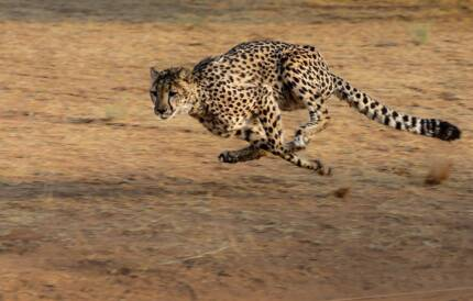 Is your website slow? Make like a cheetah and speed up - only $59