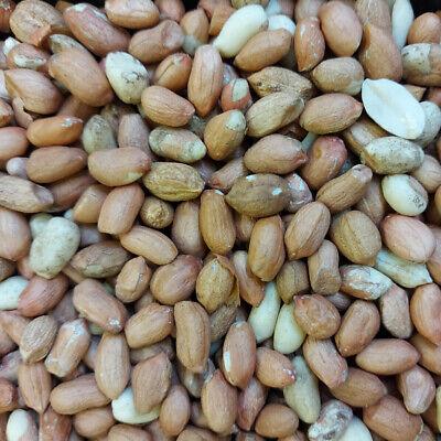 25kg Premium Peanuts Wild Birds Husk Free Garden Bird Food