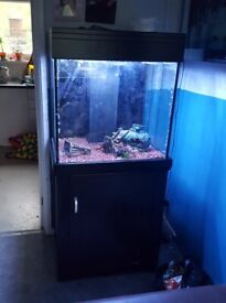 fish tank with stand and full set up