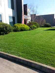 Ambelethynn Lawn and Garden maintenance Cranbourne South Casey Area Preview