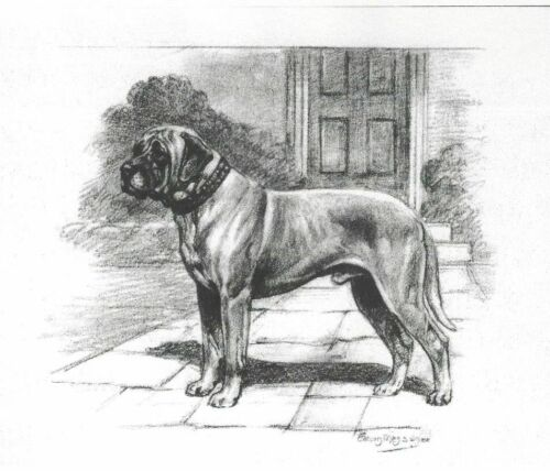 Mastiff - Dog Art Print - Megargee MATTED