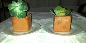 2 Sweet Terracotta Pots with Succulent Plants Islington Newcastle Area Preview