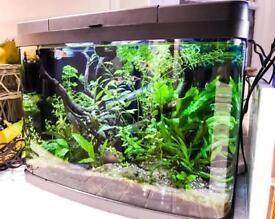 Beautiful 30 Liter Aquarium - Complete Setup