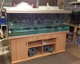 Rena fish tank set up