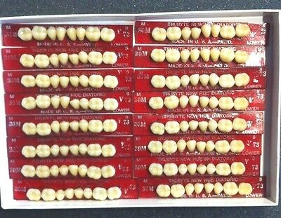 Dentsply New Hue Dentist Dental Lab Porcelain Denture Teeth  30m  L 73b4