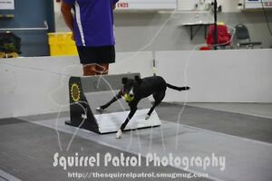 COME TRY A FUN NEW SPORT WITH YOUR DOG