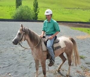 6 y/o Broken In Purebred Arabian Pure Crabbet Mare Wootton Great Lakes Area Preview