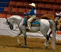 WESTERN RIDING LESSONS & BOARDING HEATED ARENA