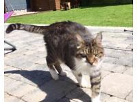 Missing cat in the Lansdowne area Antrim Rd North Belfast