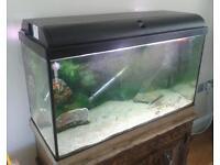Aquarium 125 - plus fish