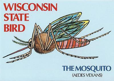 Wisconsin Chick - Postcard Wisconsin State Bird Mosquito Humor Comic MINT