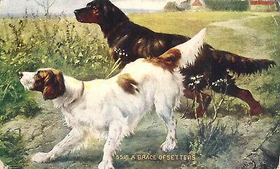 Brace of Setters Hunting Bird Dogs in Field 1909 Postcard