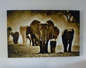 Large elephant canvas